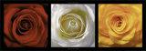 Coeurs de Roses Kunstdrucke von Laurent Pinsard