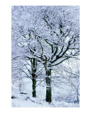 Snow Covered Trees in Winter Photographic Print by Anna Maria Miller