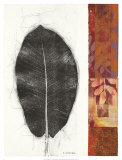 Leaf Study II Prints by Kerry Vander Meer