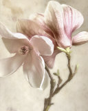 Pink Magnolia I Prints by Donna Geissler