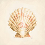 Seashell Discovery Posters by Lauren Hamilton