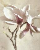 Pink Magnolia II Poster von Donna Geissler