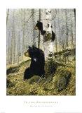 Dans les Adirondacks (ours et ourson) Affiches par Michael Coleman