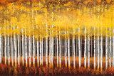 Álamos dorados|Golden Aspens Láminas por Robert Holman