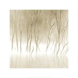 Soft Light II Poster af Adam Brock