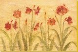 Row of Red Amaryllis Stretched Canvas Print by Cheri Blum