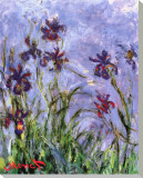 Irises Stretched Canvas Print by Claude Monet