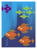 School of Fish Affiches
