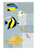 Tropical Fish Prints
