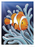 A Clown Fish Swimming by Sea Anemones Prints