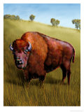 Bison Affiches