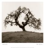 Hillside Oak Tree Plakat autor Alan Blaustein