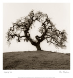 Hillside Oak Tree Poster by Alan Blaustein