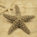 Estrelas do mar Pôsteres por John Seba