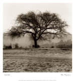 Willow Tree Prints by Alan Blaustein