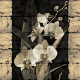 Orchids in Bloom II Affiches par John Seba