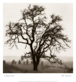 Country Oak Tree Print by Alan Blaustein
