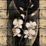 Orchids in Bloom I Posters af John Seba