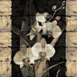 Orchids in Bloom II Plakater af John Seba