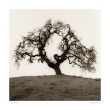 Hillside Oak Tree Posters by Alan Blaustein