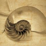 Chambered Nautilus Plakat af John Seba