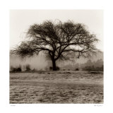 Willow Tree Posters by Alan Blaustein