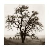 Alan Blaustein - Country Oak Tree Plakát