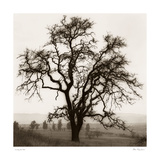 Country Oak Tree Posters by Alan Blaustein