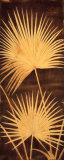 Fan Palm Triptych II Prints by David Parks