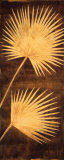 Fan Palm Triptych III Poster by David Parks