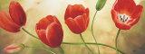 Armonia di Tulipani Pósters por Maria Grazia Luffarelli