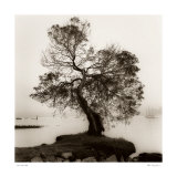 Coast Oak Tree Prints by Alan Blaustein
