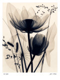 Lotus and Grasses Prints by Judith Mcmillan