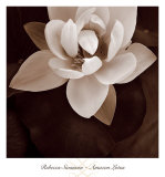 Amazon Lotus Posters par Rebecca Swanson