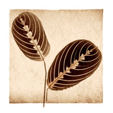 Maranta Leaves Prints by Michael Mandolfo