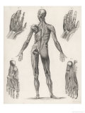 Showing Muscles of Body Hands and Feet Giclee Print by G. Aikmann