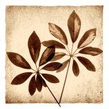 Cassava Leaves Print by Michael Mandolfo