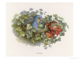 Mischievous Elf Raids a Birds' Nest Giclee Print by Richard Doyle
