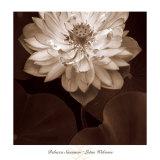 Lotus Welcome Kunstdrucke von Rebecca Swanson