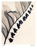 Solomon's Seal Plakat af Judith Mcmillan