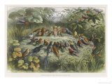 Musical Elf Teaches the Young Birds to Sing Giclee Print by Richard Doyle