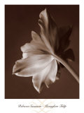 Moonglow Tulip Poster by Rebecca Swanson