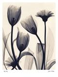 Tulip and Daisy Kunstdrucke von Judith Mcmillan