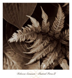 Painted Ferns II Prints by Rebecca Swanson