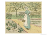 Girl Working in a Rural Kitchen Garden Collecting Cabbages Giclee Print by Randolph Caldecott