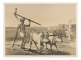 Indian Farmer and Oxen Giclee Print by George Franklin Atkinson