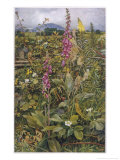 Naked Fairies Among the Foxgloves in Ancient Britain Giclee Print by Eleanor Fortescue Brickdale