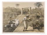 Natives Gardening with the Help of Oxen on a British Station Giclee Print by Captain G.f. Atkinson