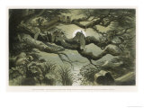 Fairies Asleep in the Moonlight Giclee Print by Richard Doyle