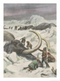 Two Mammoths are Found Frozen in the Jamalm Peninsula 2400 Kilometres North of Saint Petersburg Giclee Print by Achille Beltrame